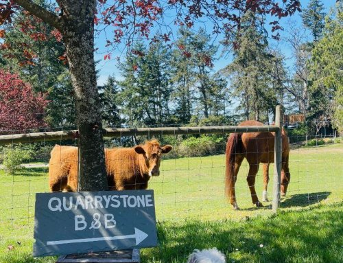 Quarrystone House B&B Grounds