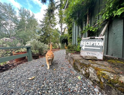 Quarrystone House Reception Greeting | Bed and Breakfast